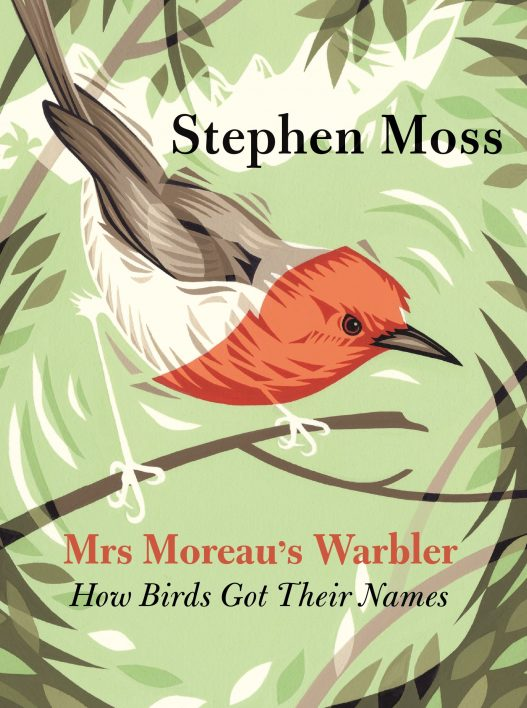Mrs Moreau's Warbler by Stephen Moss